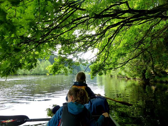 Grün über dem Fluss, Mai 2015 - explored -