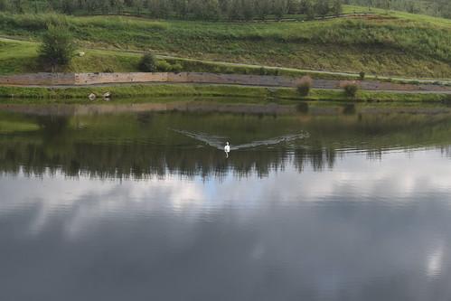 swan pond mercierorchard blueridgetn