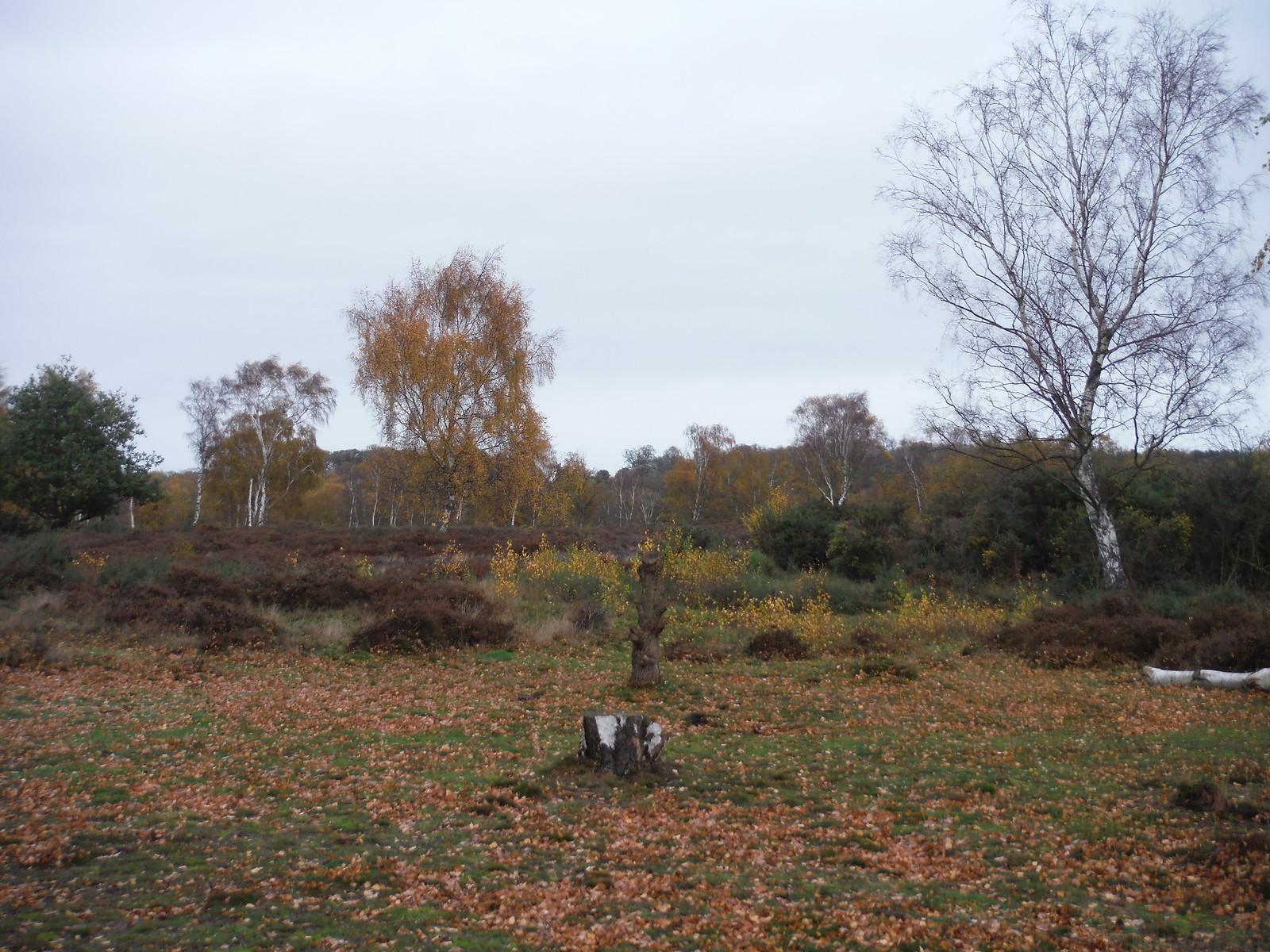 Cooper's Hill Nature Reserve (II) SWC Walk 232 Lidlington to Flitwick