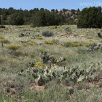 Prickly Pear Meadow