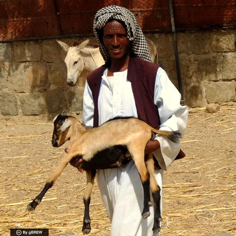 Goat seller at the animal market (camel market) of Keren. #Eritrea