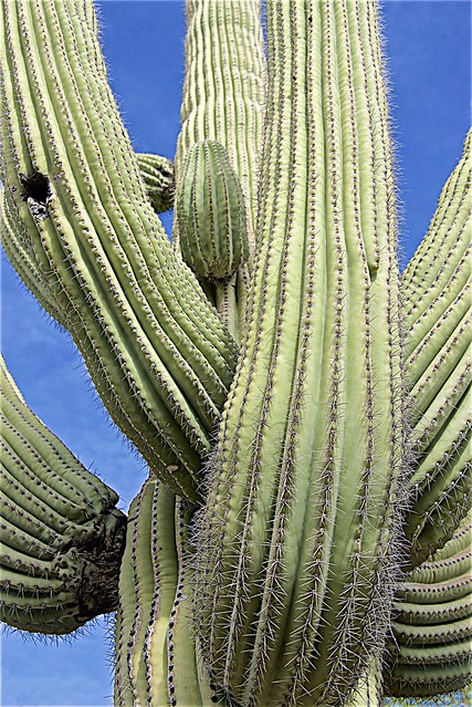 A Cactus of Substance