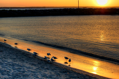 ocean sea seagulls reflection birds sunrise australia bathing southernocean westernaustralia esperance