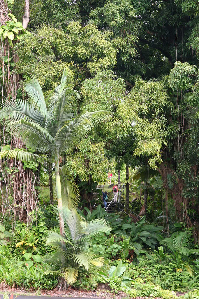 People from our tour walking in the lush jungle that surro