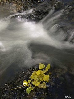 Empieza el otoño   by Pedrali