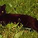 At Home w/Kitties - Missy & Carmine
