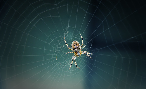 In the spiders web | by DavGoss