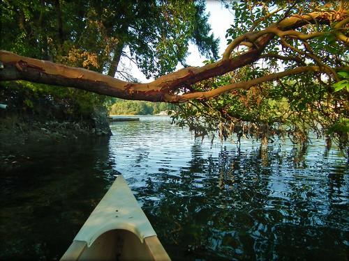 reflections canoe estuary pugetsound madrona overhangingtree 1bluecanoe