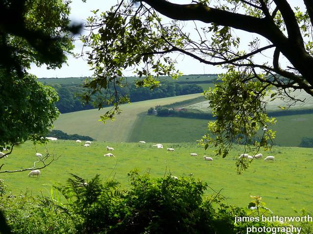 Cornish View