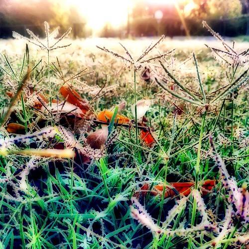 apple sunrise square golden mac glow dew squareformat sherry normal 4g iphone 2011 inthebackyard iphoneography instagramapp uploaded:by=instagram foursquare:venue=4c31f96f7cc0c9b65480ef9a