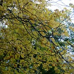 Changing colours of the leaves