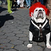9th Annual Howl-o-Ween Doggie Costume Parade