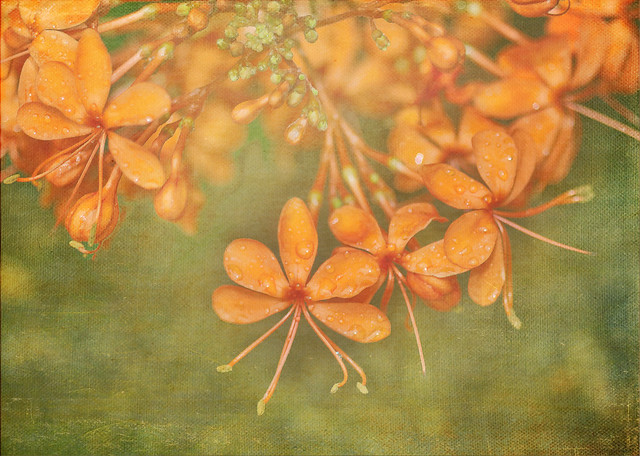 Floraison orangée
