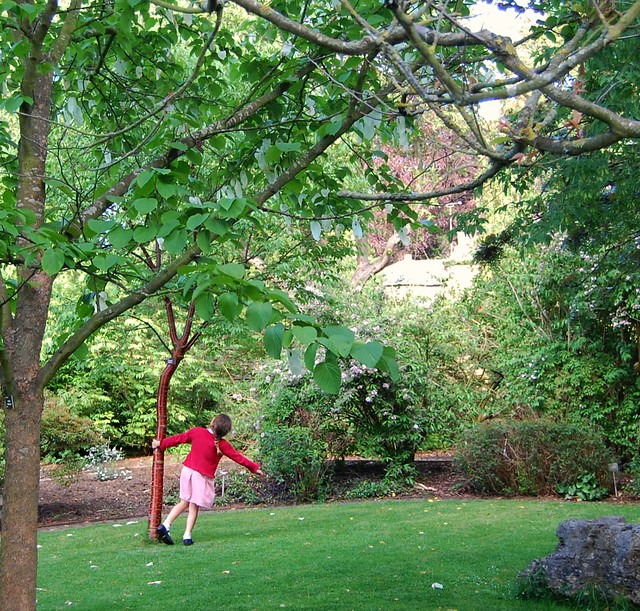 This is What Trees Are For! - Taken in the Ernest Wilson Garden in Chipping Campden, Cotswolds, Gloucestershire