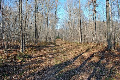 Hickory Ridge Trail, Chippewa Co., WI | by aarongunnar