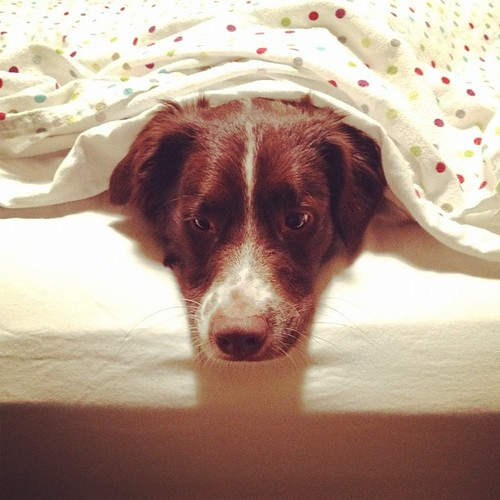 There's a puppy in them thar sheets | by jamiepatra