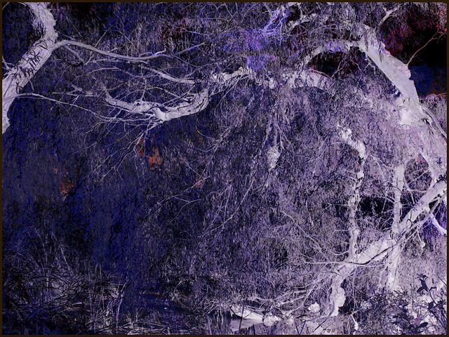 Autumn Tree Negative