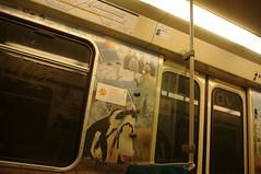 Rotterdam subway penguins