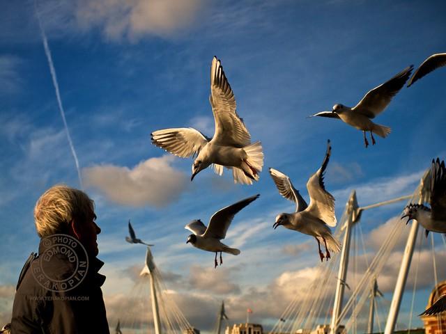 Seagulls, Southbank