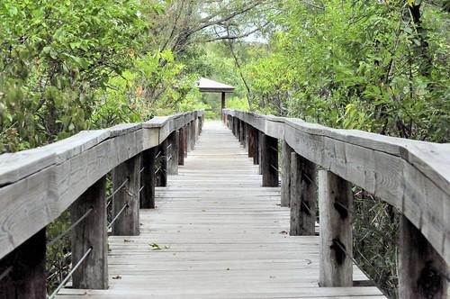 scenicview fortworthnaturereserve wildlifeviewingarea nikond5100 boardwalktothemarsh boardwalktolotusmarsh