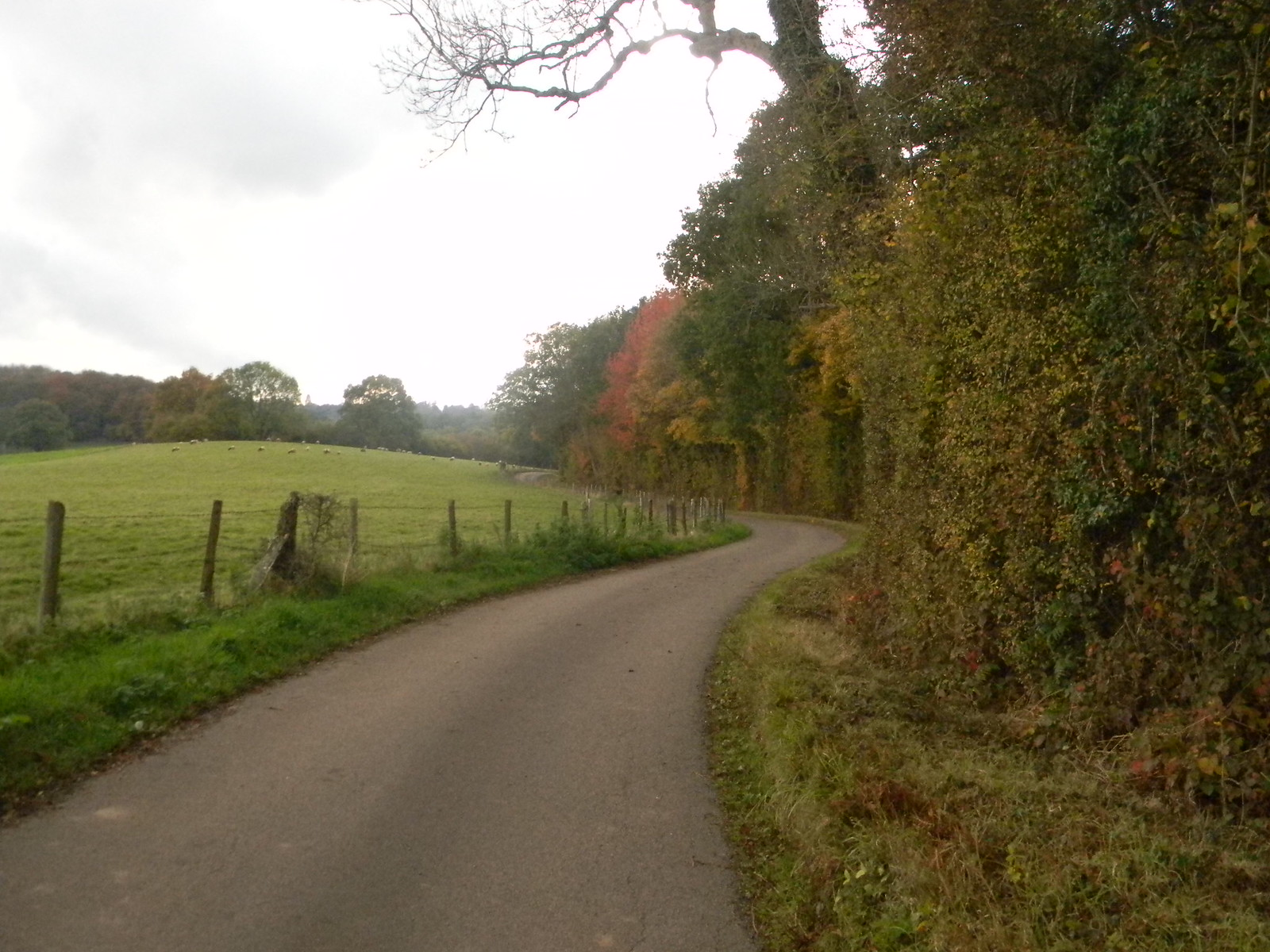 Aesthetically pleasing road Witley to Haslemere
