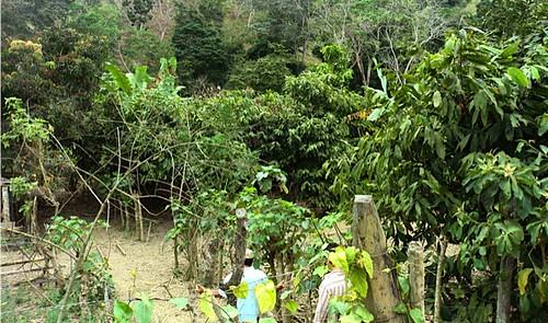 ecuador-agricultural-real estate   by ecuadorliving