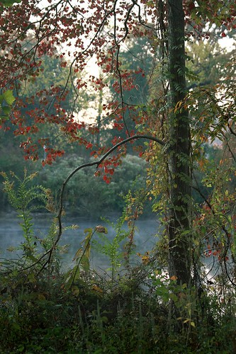morning autumn tree fall nature landscape pond weeds louisiana seasons brush 70mm canonef70300mmf4556isusm mrgreenjeans popcorntree gaylon gaylonkeeling