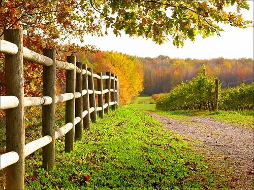 autumn ohio fall fence vineyards ashtabulacounty harpersfield southriverwinery