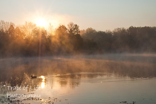 autumn ohio mist nature sunrise nikon wildlife sharonwoods