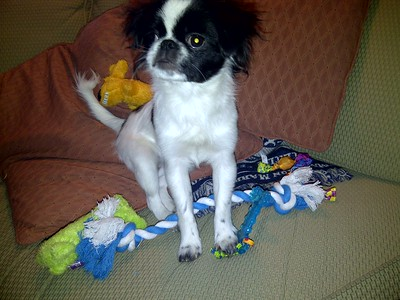 Oliver with his toys as a little puppy