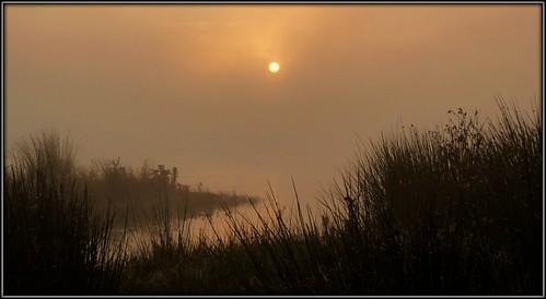 uk sun mist nature water grass fog sunrise lancashire preston brockholes