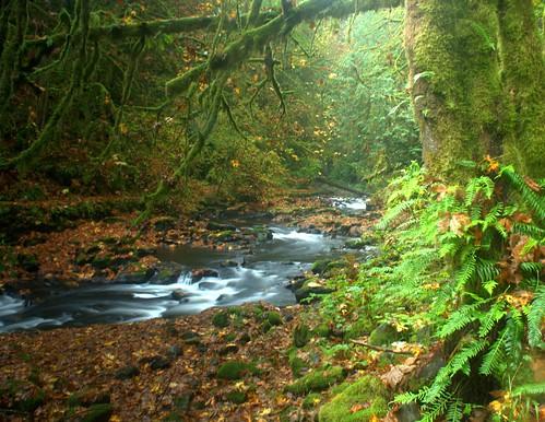 creek woodland washington cedar