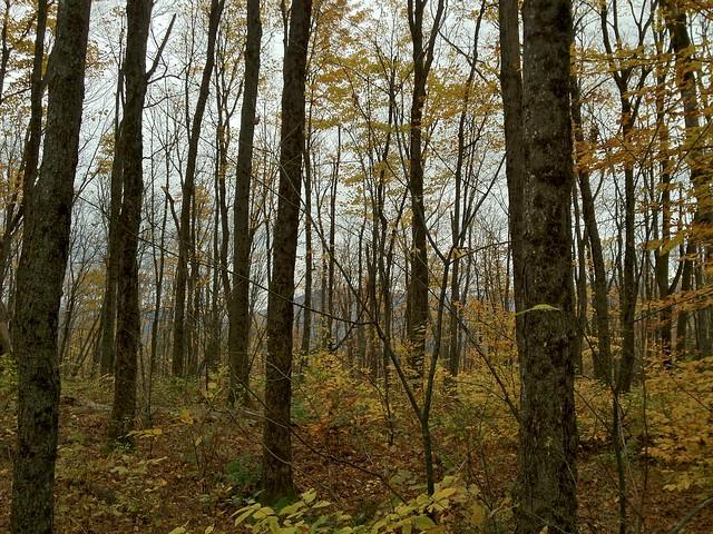 1:49:20 (66%): vermont hiking fairlee crossrivendelltrail baldtopmountain