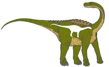 2011. május 26. 8:22 - Nopcsa Ferenc - Magyarosaurus
