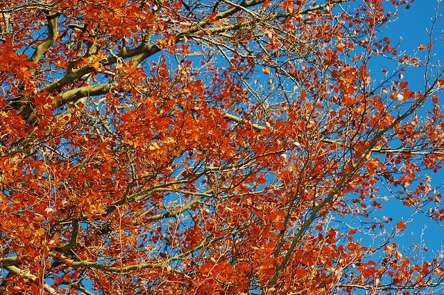 Autumn in Hartwood