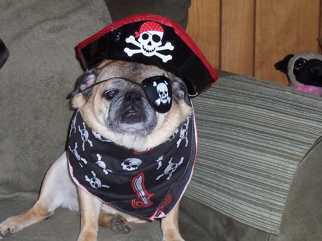 Cassie the Pirate