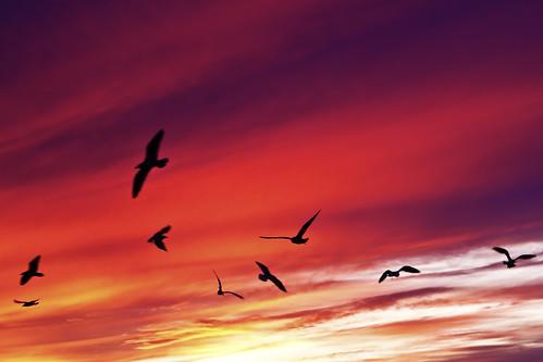 sunset seagulls ontario birds sunrise lakeshore lakeshoreblvd birdssunset torontosunrise lakeshorevillage