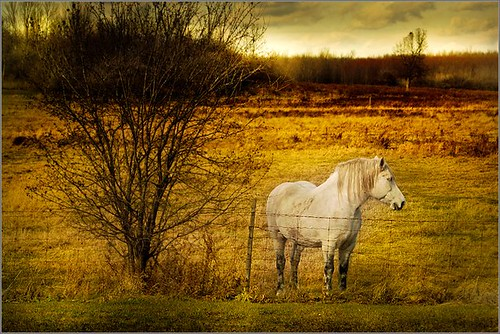 sky horse white tree field yellow fence one pasture whitehorse stevestevesteve colorphotoaward