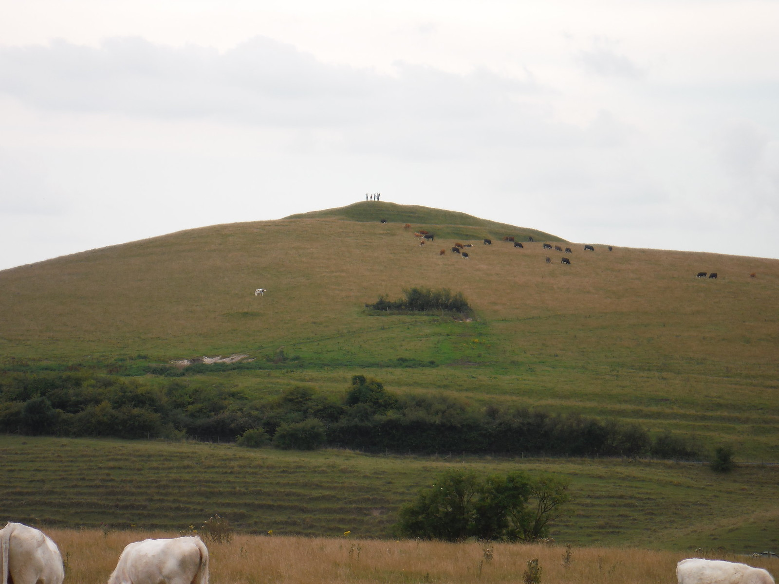 Knoll with Adam's Grave (Long Barrow) SWC Walk 127 Pewsey Circular