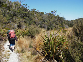Vegetation - Heaphy Track | by Department of Conservation