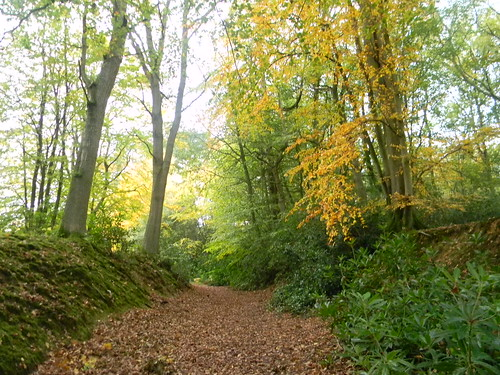 Colour in the woods Witley to Haslemere