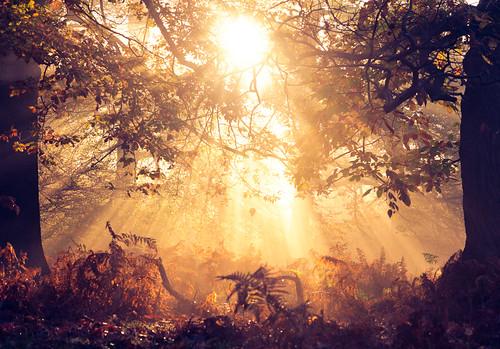 lighting morning autumn trees light england sun mist nature misty fog fairytale forest sunrise wonderful landscape golden countryside kent woods nikon f14 85mm ethereal flare rays sunrays wonderland magical enchanted d3