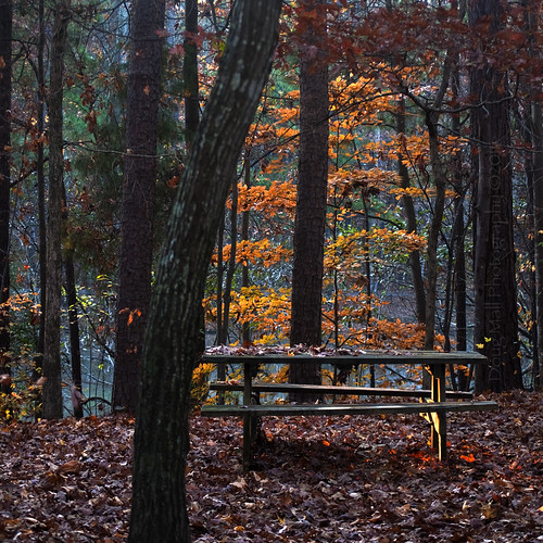 morning color fall nature leaves bench picnic firstlight nikond5000 dougmall