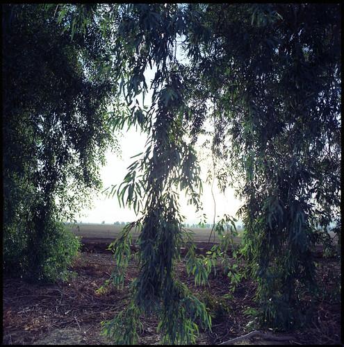 sunset summer arizona phoenix desert bronica monsoon fields eucalyptus dust 45mm goodyear selfdeveloped windbreak unicolor s2a komura kodakektar cottonlane