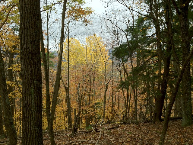 2:09:06 (78%): vermont hiking fairlee crossrivendelltrail baldtopmountain