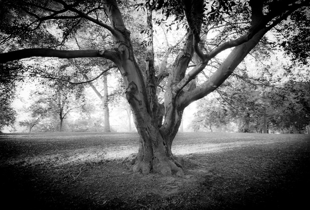 Tree in washington park milwaukee wi ryan janecek flickr - Washington park swimming pool milwaukee ...