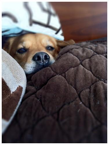 Snug as a bear under pillows   by tehgipster