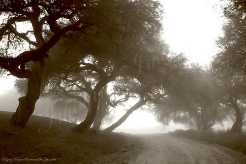 El camino a la niebla...