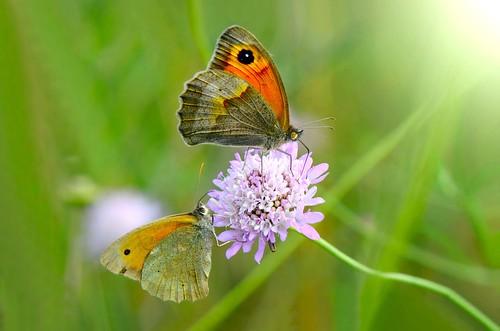 butterflies in love ....!!!