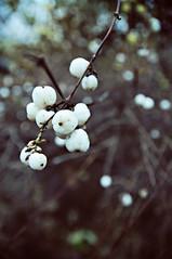 Lumeton marraskuu